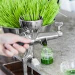 5 Best Wheatgrass Juicer Reviews 2019